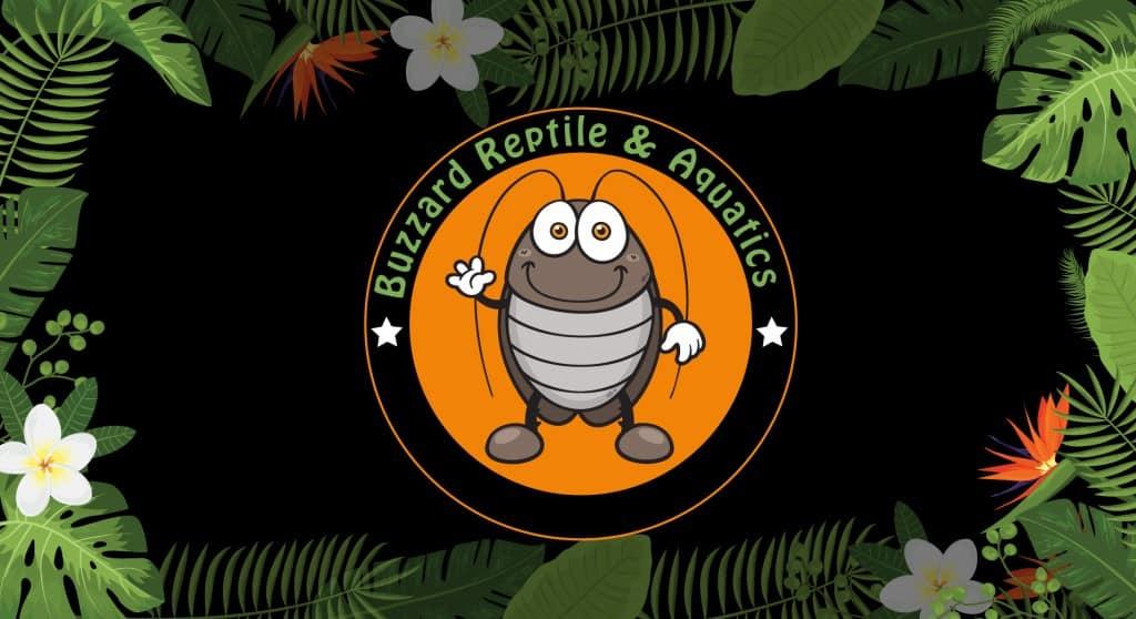 Buzzard Reptile