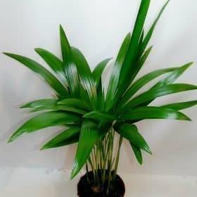 Plants Medium