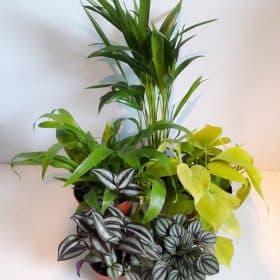 Plant Bundles
