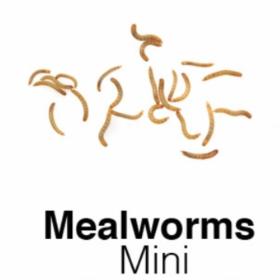Mini Mealworm