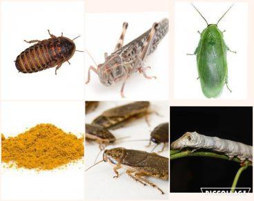 Chameleon Feeder Pack